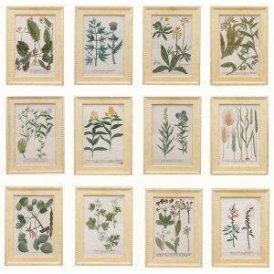 Set of Twelve 18th Century Botanical Prints by Georg Dionysius Ehret