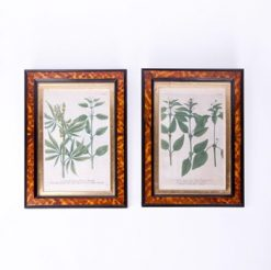 19th Century Pair of Botanical Prints