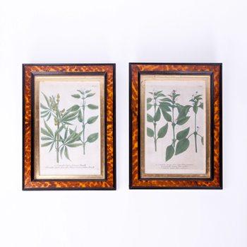 19th Century Pair of Botanical Prints